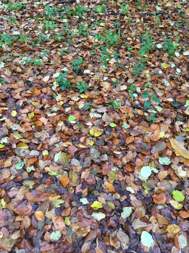 Autumn colours Run trails running blog blogger